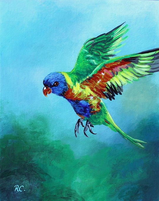 rainbow-lorikeet-flying- med